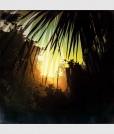 palms3