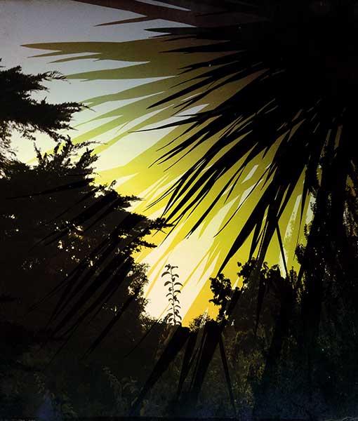 palms6